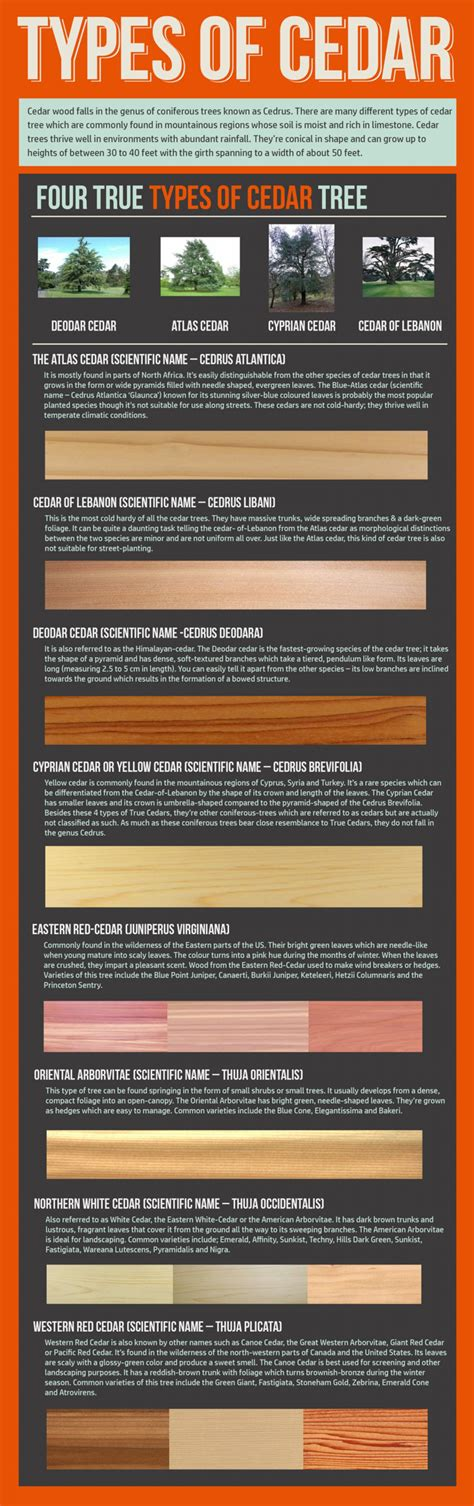 different types of cedar infographic visual ly - Types Of Cedar Lumber