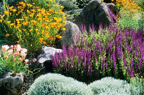 plants for conditions top 10 plants for drought conditions