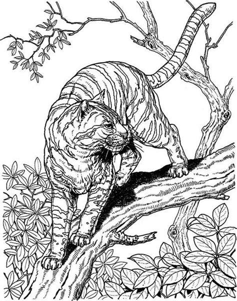 hard lion coloring pages tiger ausmalbilder f 252 r erwachsene kostenlos zum ausdrucken