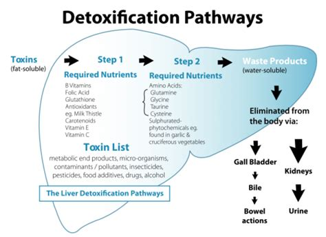 How To Detox For A Urine Test Naturally by How To Beat A Weight Loss Plateau 9 Tips Origin Weight Loss