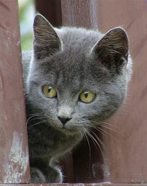 gatto in appartamento gatti d appartamento yahoo answers