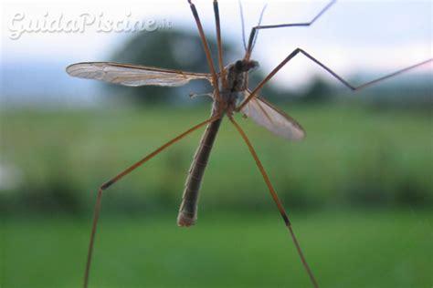 come eliminare le zanzare tigre dal giardino come eliminare le zanzare senza prodotti chimici
