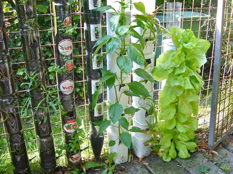 Pet Bottle Vertical Garden Farming Or Gardening In Bottle Towers Or Pot Towers