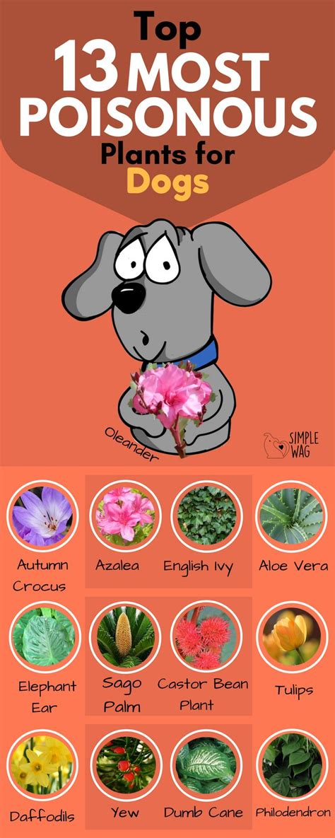 what plants are poisonous to dogs 190 best images about pet poison on pinterest dog care