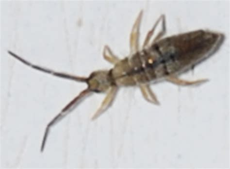 tiny bugs in bathroom springtails springtails in bathroom 28 images how to get rid of