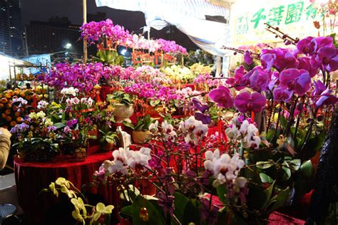 new year flower types photo of the day in bloom for lunar new year in hong