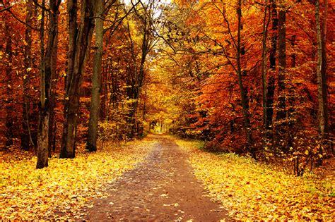 imagenes de otoño primavera verano oto 241 o las cuatro estaciones