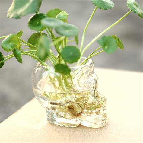 Glass Planter by Glass Skull Planter Wine Glass Succulents Pot Cactus