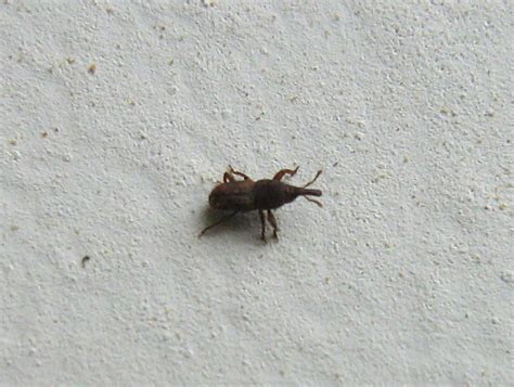 bug house house bugs identifier gallery