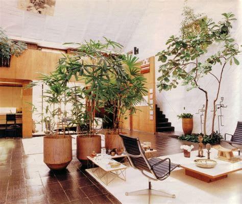 wohnzimmer palme palmen f 252 rs wohnzimmer die das zimmer zweifellos erfrischen