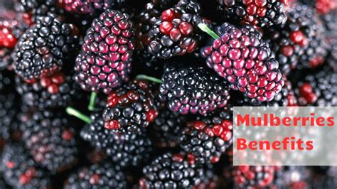 fruit ka naam mulberries benefits shahtoot se nikhare apni twacha