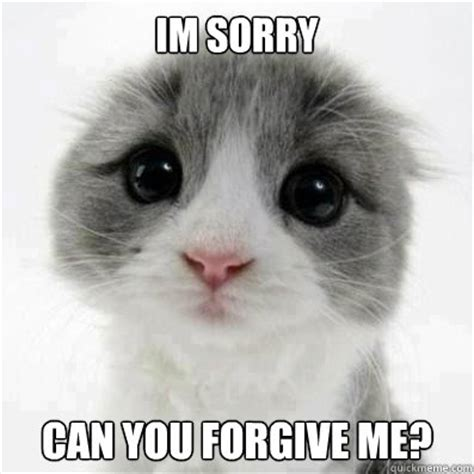 Cute Cat Meme - site unavailable