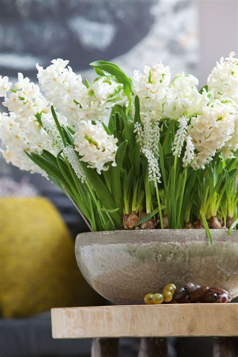 spring decorating ideas refresh  home  spring