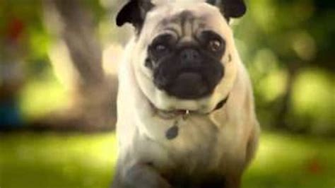 doritos pug commercial dorito s pug attack one of all time favorite bowl