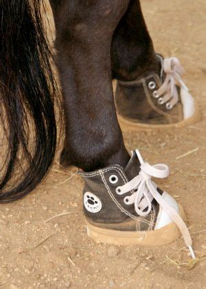 best shoes for horseback 17 best images about pedicures on