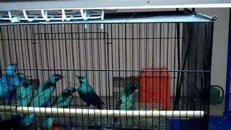 pomona bird mart nov 27 2011 youtube
