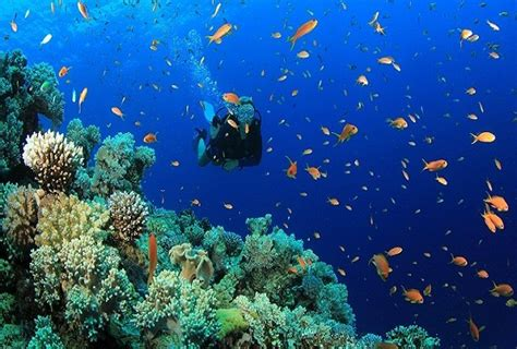 best diving places best scuba diving places in the world holidaybirds