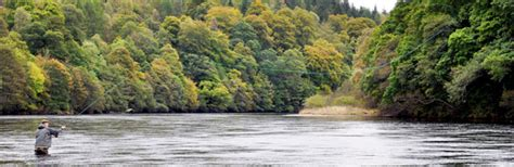 sectioned scotland new on fishipedia scotland section