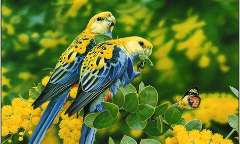 birds blue yellow parrots butterfly tree  yellow