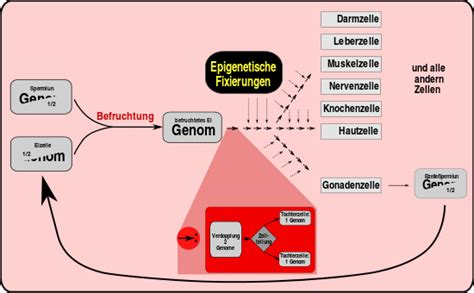 What Is Concept by Epigenetik Wikipedia