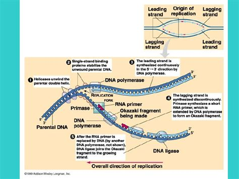 4 proteins involved in dna replication order content from the best essay writing service