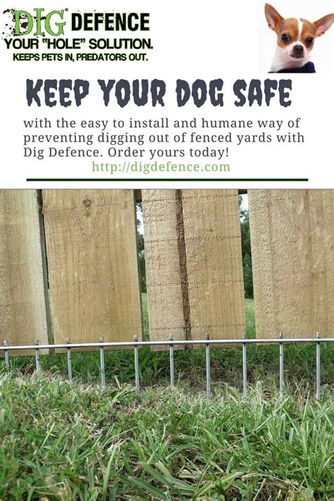 how to keep dog in yard best 25 cat fence ideas on pinterest cat enclosure