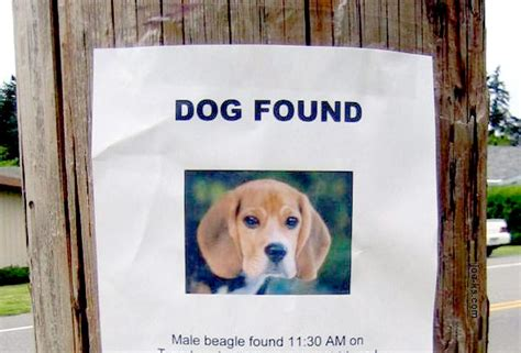 buy dogs technology can help find a lost pet the pet product guru