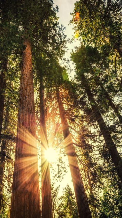 wallpaper forest   wallpaper trees sunlight os