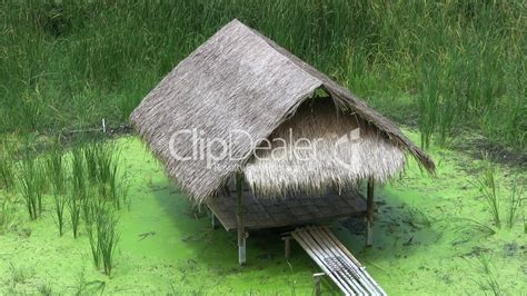 Grass Hut Bamboo Grass Hut A Sw Royalty Free And