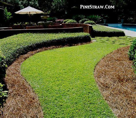 pine straw mulch facts straw mulch homestead gardens