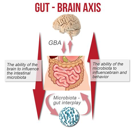 gut intelligence the wisdom to the the guts to do something about it books part 3 improving digestion for gain loss