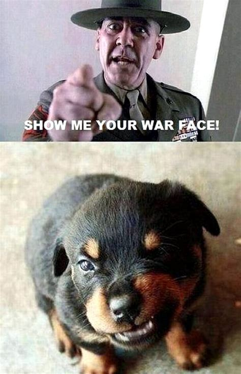War Face Meme - show me your war face puppy daily picks and flicks