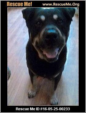 rottweiler rescue san diego california rottweiler rescue adoptions rescueme org