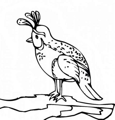 quail coloring page preschool quail coloring pages for preschool preschool and