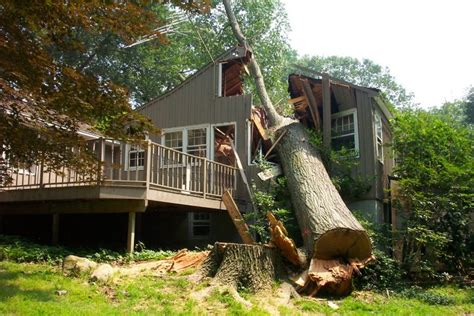 cutting trees near a house pictures