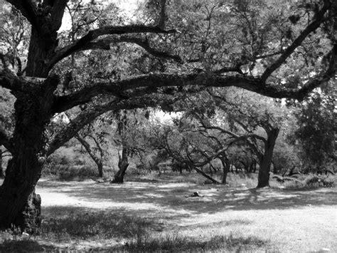 fotos de naturaleza en blanco y negro blog de fotograf 237 a blanco y negro imagen foto naturaleza diversa
