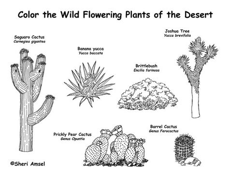 Thanksgiving Craft Ideas Planting Tree Coloring Page - 1000 ideas about desert biome plants on