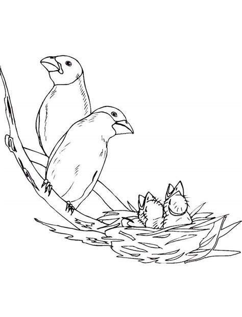 coloring pages of birds in a nest birds nest coloring page for kids 1661 coloring ws az