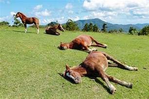 how do horses sleep animal friends