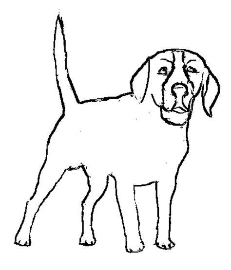 imagenes de animales carnivoros para colorear dibujos de animales carnivoros para colorear pelautscom
