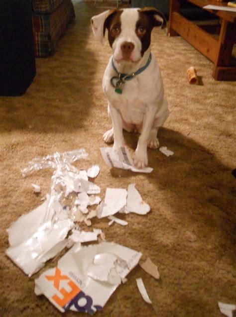 dog shaming desk 87 best images about pet shaming on pinterest editor my