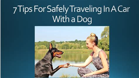 how much benadryl for a to go to sleep 7 tips for safely traveling in a car with a benadryl for dogs