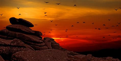 birds dawn dusk flock flying landscape rocks scenic