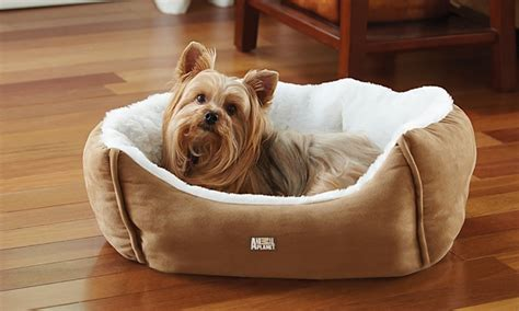 animal planet dog bed animal planet pet bed groupon goods