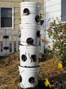 vertical strawberry planter learn about planting in