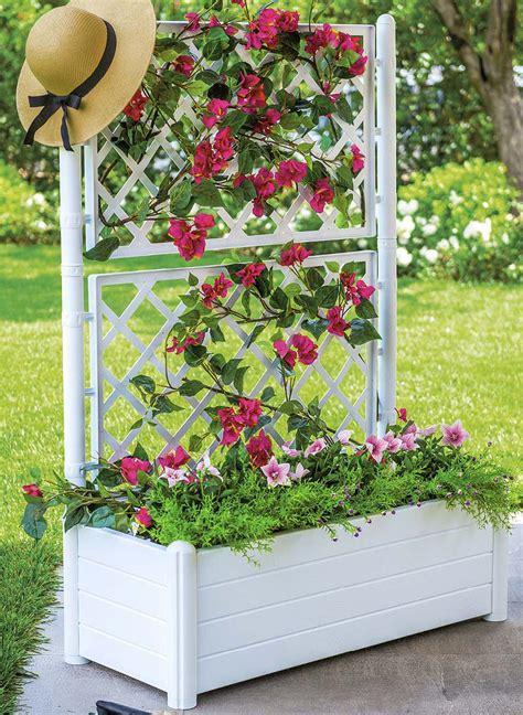 piante per fioriere piante ricanti per fioriere semplice e comfort in una