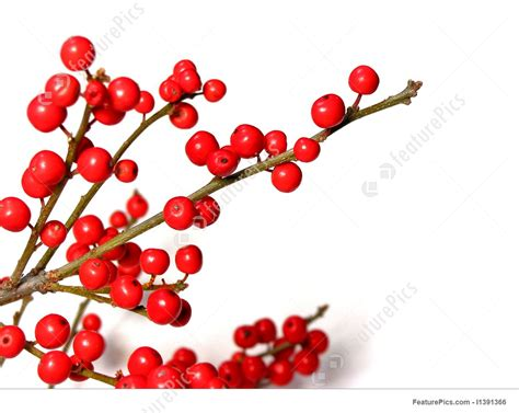 christmas decorations with berries berries photo