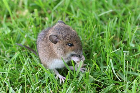 Garden Mouse by Woodmouse A Slug In Garden Flickr Photo