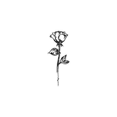 simple black rose tattoo 25 best ideas about simple line drawings on