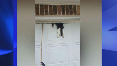 Garage Door Jammed Shut Cat In Garage Door Saved By Sheriff S Deputy